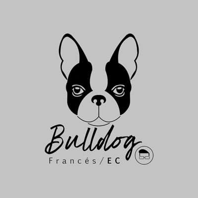 Bulldog Francés Ecuador